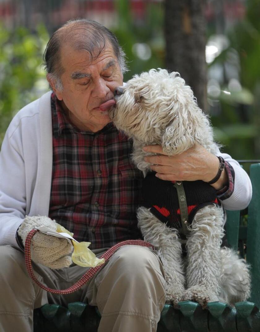 """La tendencia de los """"perrhijos"""" y dueños de mascotas más responsables han generado un mercado prometedor con servicios confiables, un contexto que ha dado pie para que emprendedores mexicanos crearan la aplicación WeDogs!. EFE/ARCHIVO"""