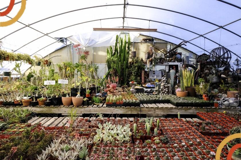 Plants at the California Nursery Specialties Cactus Ranch in Reseda.
