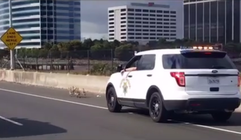 CHP corrals baby geese