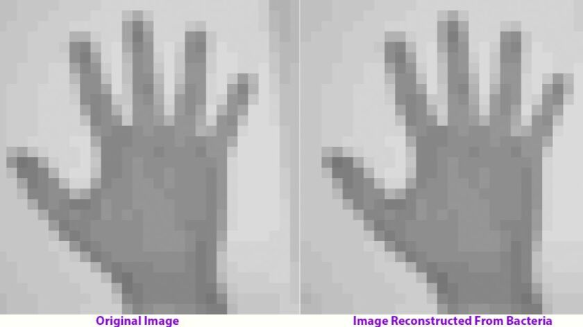 Before inserting a movie into living DNA, the authors experimented with the static image of a hand.