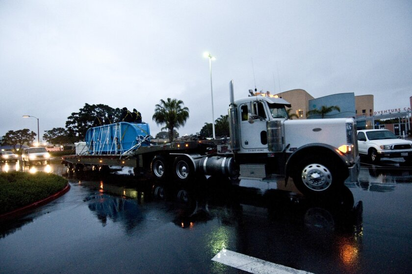 Argo the pilot whale arrives at SeaWorld San Diego.