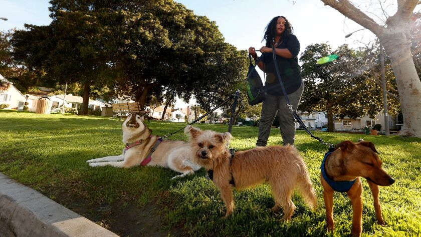 Karen Dacres, standing in Monteith Park, prepares to walk her dogs Akira, from left, Benji and Campeon, through the View Park area in Los Angeles.
