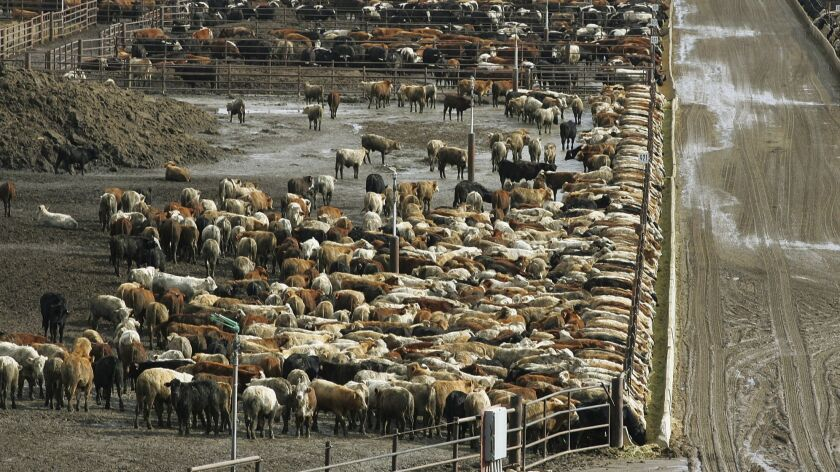 Cattle on Harris Ranch farms in Coalinga, Calif., in 2008. Harris Ranch Beef Holding Co. is being sold to Hanford-based Central Valley Meat Co. The companies will operate independently under the combined ownership of Central Valley Meat Holding Co.
