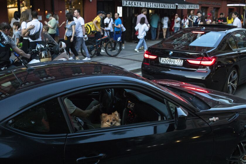 A dog looks out of the car window as people enjoy a warm weather at Patriarch Ponds in Moscow, Russia, Monday, June 8, 2020. The Russian capital is ending a tight lockdown that has been in place for more than two months, citing a slowdown in the coronavirus outbreak. Moscow's mayor said that starting Tuesday residents will no longer be required to obtain electronic passes for travel and can walk, use public transport and drive without any restrictions. (AP Photo/Pavel Golovkin)