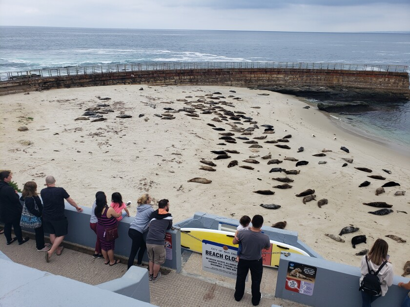 La Jolla's Children's Pool is closed by way of a post-and-chain for five months out of the year, in accordance with harbor seal pupping season