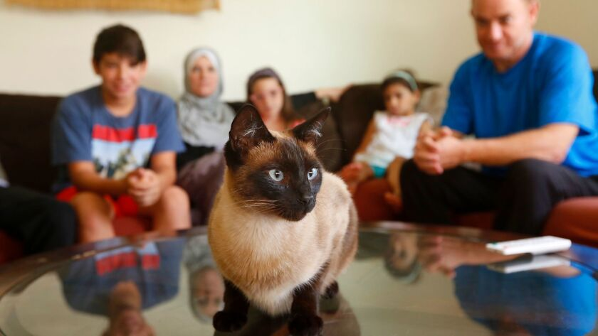 Cece, a Siamese cat owned and loved by Ahmed Wehbe and his family, needed surgery when she was hit by a car and her back was fractured. A grant from FACE paid for the surgery and her post-surgical care. Cece has made a full recovery.