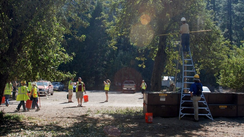 Park staff help visitors and volunteers pick apples from a historic orchard in Yosemite Valley.