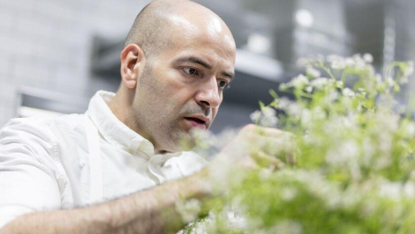 VENICE, CALIFORNIA - May 6, 2019: Yours Truly chef and co-owner Vartan Abgaryan picks fresh cilantr