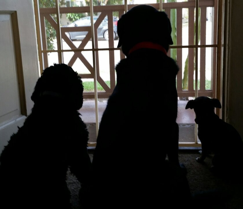 A scene like this - three dogs in a household - will be OK in La Mesa if the City Council goes along with a recommendation from the city's Planning Commission.