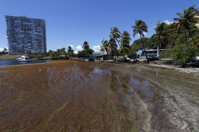 Vista de una costa al este de Puerto Rico afectada por el turismo. EFE/Archivo