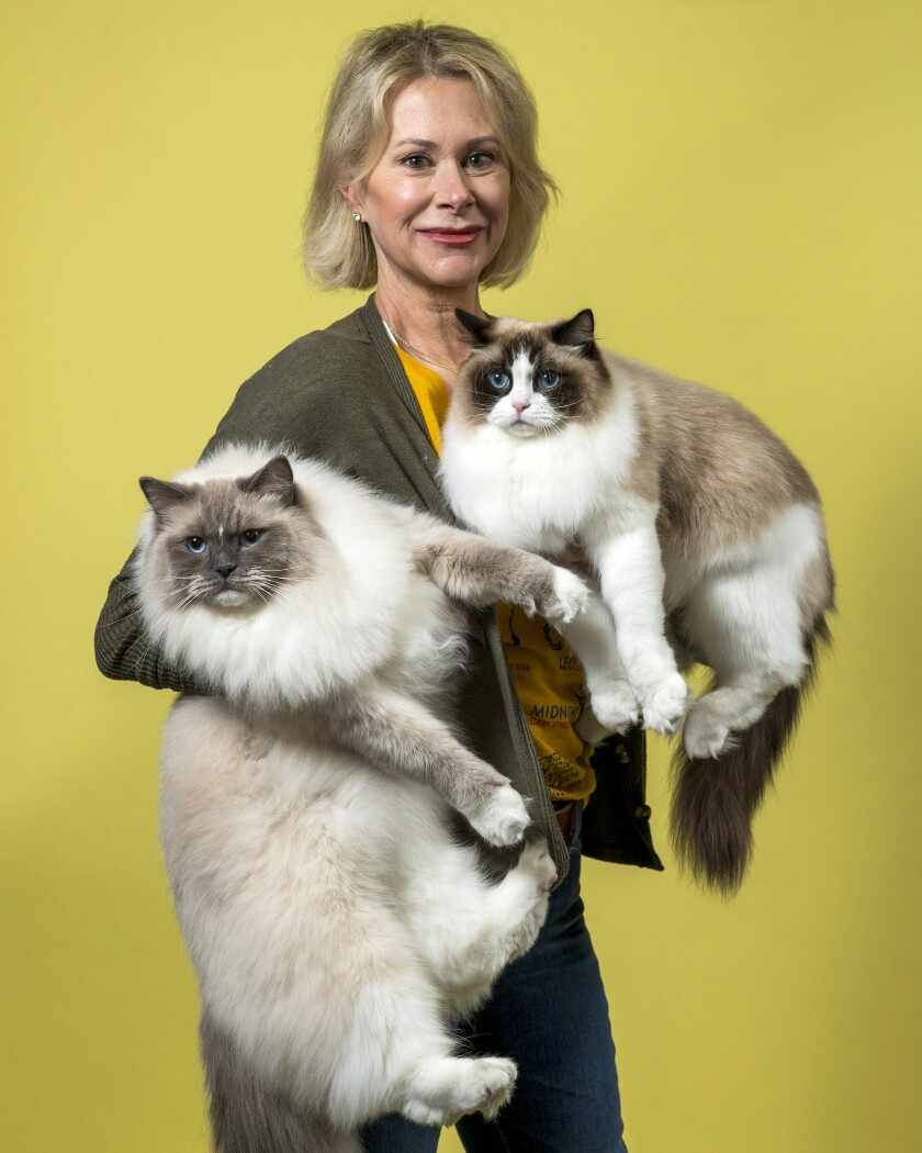 Julie Supple holds her Ragdoll cats, Chuck Bass, left, and Mary Tyler Meow.