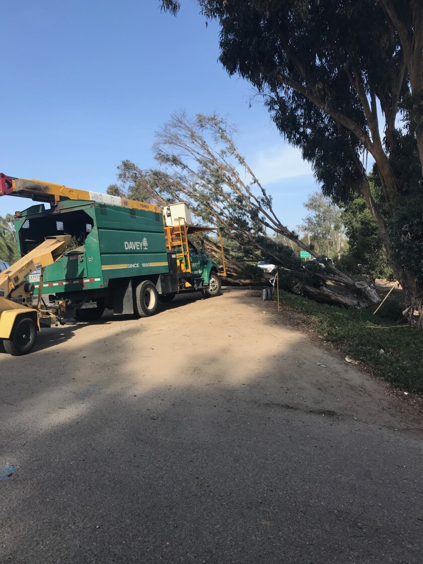 A tree fell down during the October Santa Ana winds at the SDG&E substation on Via De Santa Fe.