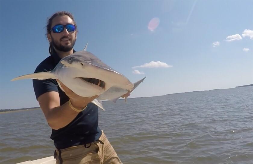 científico Bryan Keller sosteniendo un tiburón cabeza de martillo en el río North Edisto en Carolina del Sur.