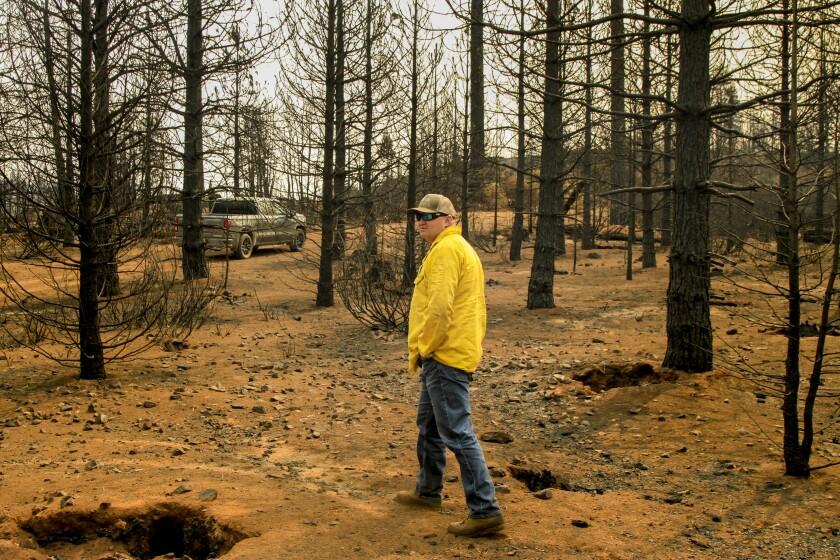 A man walks among burned trees and bare ground.