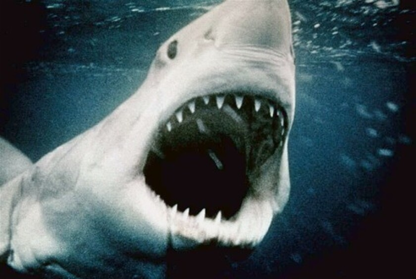 Shark from the Jaws movies