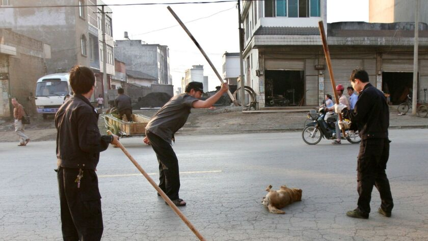 Officials club a dog to death on a street in southwest China's Yunnan province, where as many as 50,