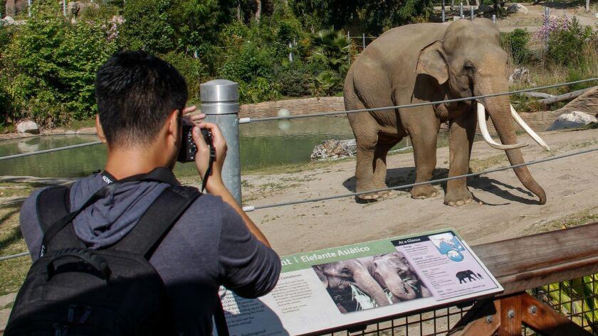 2665471_ME_0418_Zoo_Elephant_IK