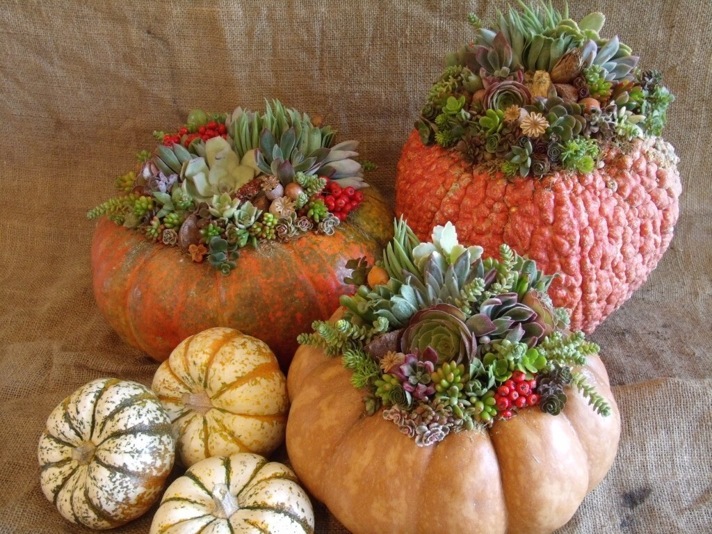Laura Eubanks said she conceived the pumpkin planter idea three years ago after wanting to do something different with Trader Joe's pumpkins. Her process involves gluing sphagnum moss and succulents to the pumpkin rather than cutting it open, to prolong the life of the pumpkin. The succulents, she says, don't mind the glue -- even if you're using a hot glue gun to set the design quickly.