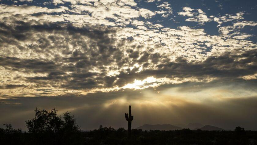 SEDONA, AZ - OCTOBER 07, 2014 - Cactus against a dramatic sunset in Tonopah, Arizona, off Interstate
