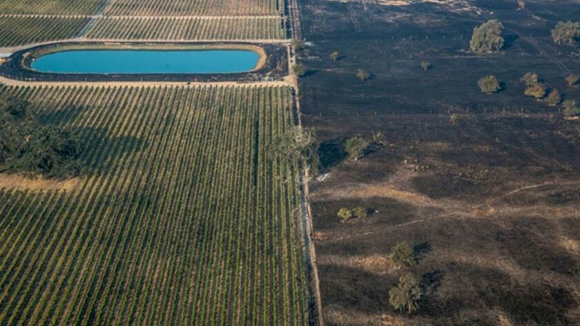 This aerial photo shows a lush vineyard next to a scorched wasteland near Vintners Inn, just north of Coffey Park, Sonoma County, near Santa Rosa, Calif., on Oct. 12, 2017.