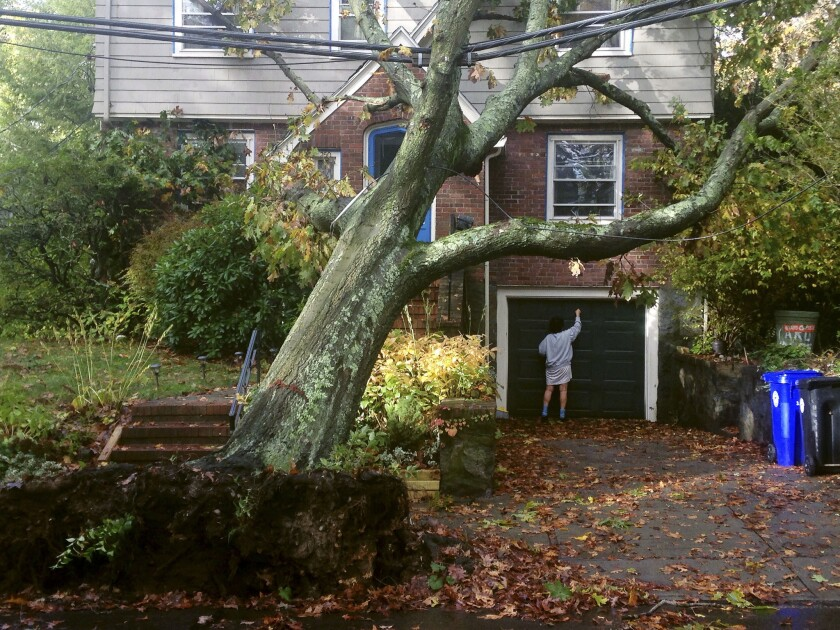 A toppled tree leans onto a power line after an overnight storm Monday, Oct. 30, 2017, in Brookline, Mass.