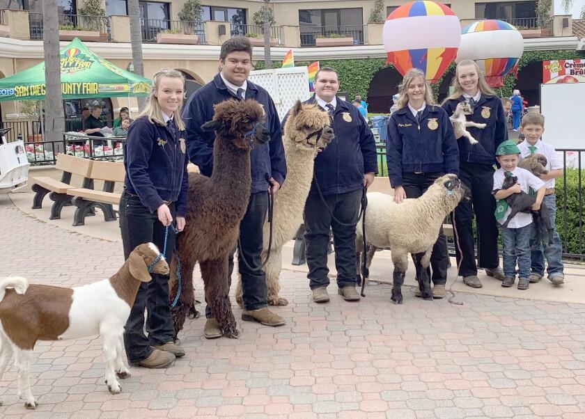 FFA at county fair.jpg