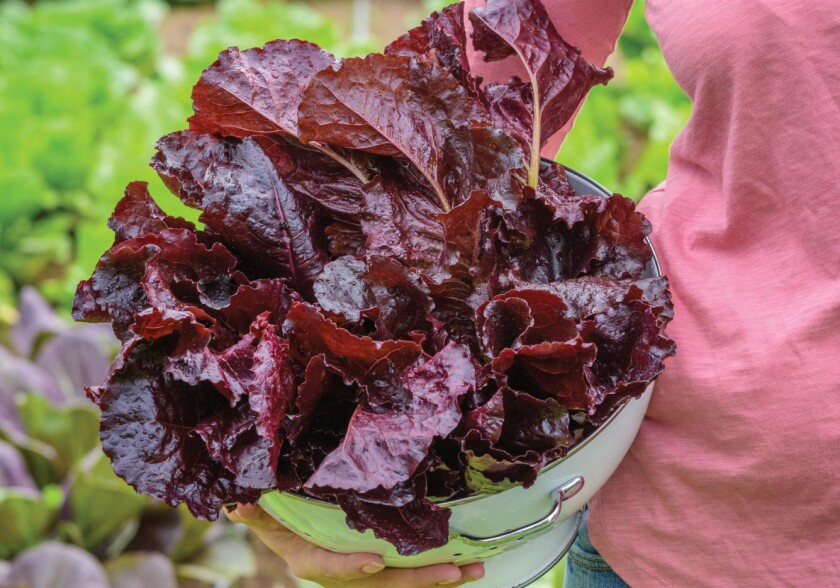 12 new vegetables to grow in your garden - The San Diego Union-Tribune