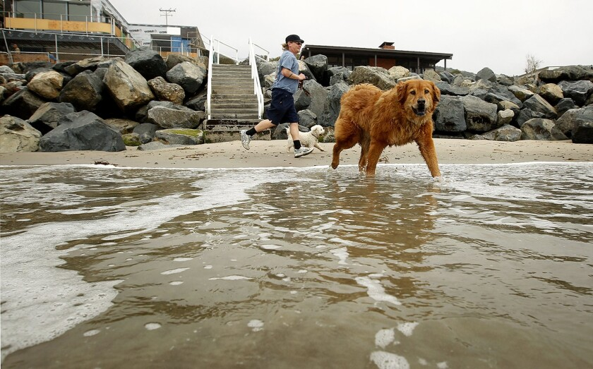 Some beaches along the Southern California coastline allow dogs. Most of them do not.