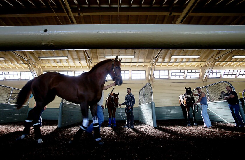 Grooms prepare thoroughbreds for the first day of the winter-spring meeting at Santa Anita Park in Arcadia.