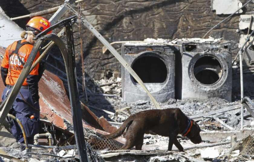 A search dog looks for survivors of the 2010 blast of a PG&E pipeline in San Bruno.