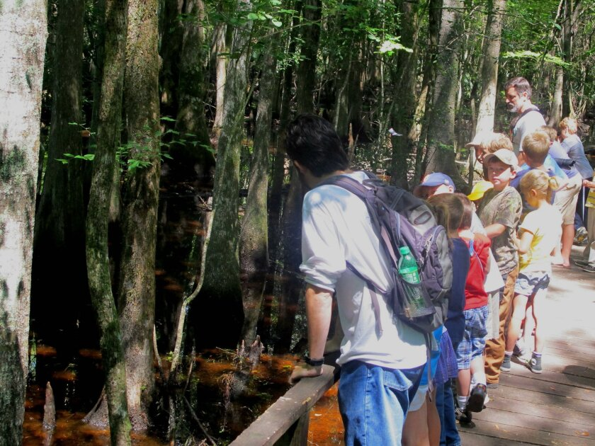 FILE - In this June 22, 2012 file photo, day campers look into the swamp at the Francis Beidler Forest in the Audubon Center and Sanctuary, near Harleyville, S.C. The Audubon has registered 450,000 carbon offset credits with California's cap and trade emissions program. The sale of the credits is expected to bring millions of dollars for support of the forest. (AP Photo/Bruce Smith, file)