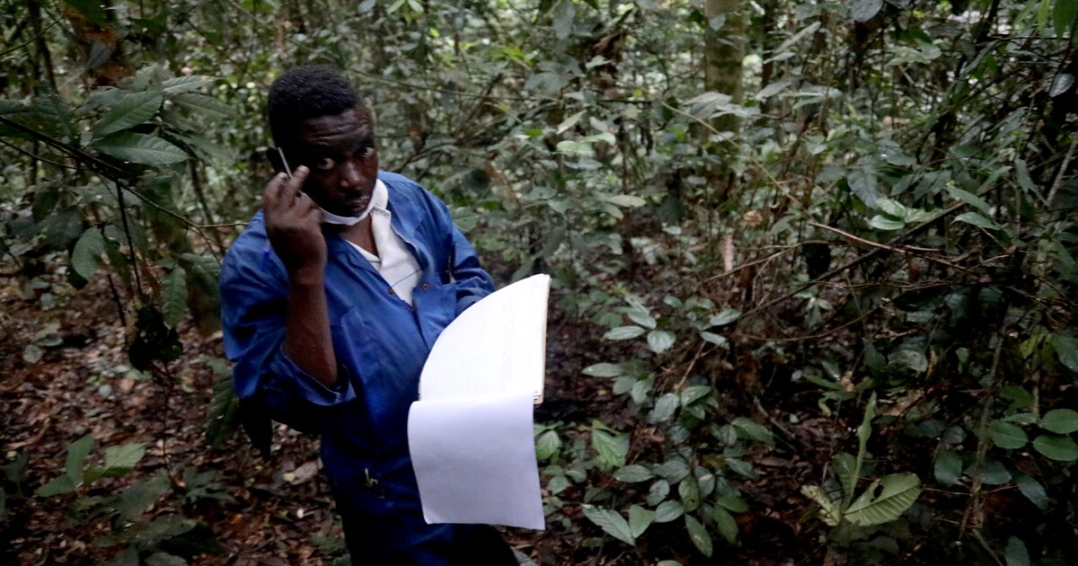 In Central Africa, villages join an experiment to save the world's second-largest rainforest