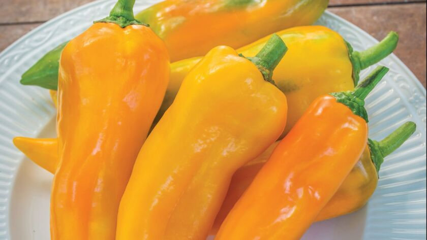 Sweet Pepper Orange 'Mama Mia Giallo'