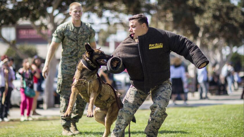 Lance Cpl. Daniel Fenstermacher, with 1st Law Enforcement Battalion, I Marine Expeditionary Force, commands his military working dog Ortis to release the bite gear at Tuna Harbor Park on Oct. 13 as part of San Diego Fleet Week.