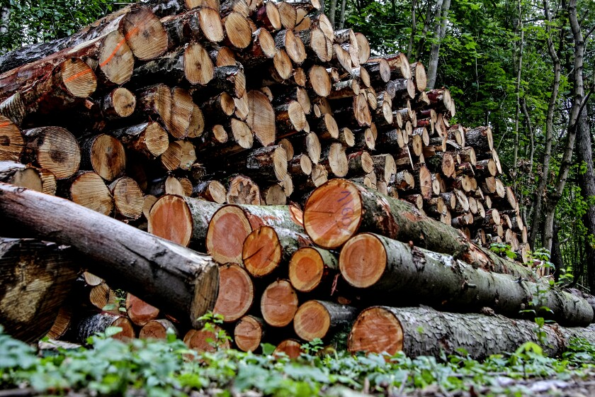 Wood stacked among remains of the forest grubbed under the new road construction are seen in Gdansk, Poland.