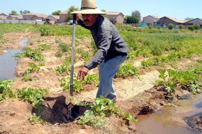 El iraquí Hussein Al Hamka, que llegó en 2009 a Estados Unidos como refugiado y hace cuatro años se dedica a la agricultura en Phoenix, Arizona (EE.UU.) EFE/Archivo