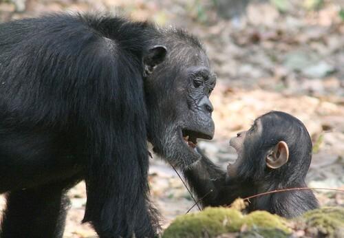 Gwekolu and baby