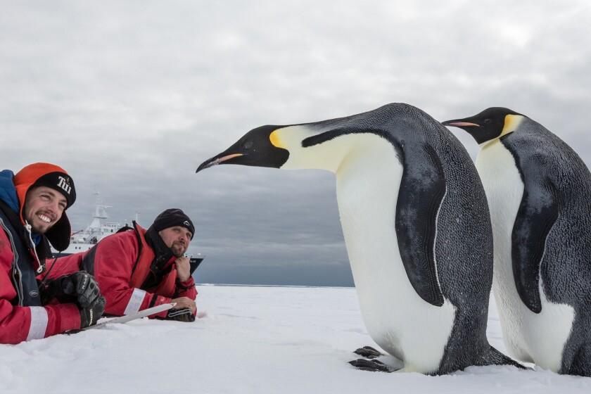 Emperor penguins at McMurdo Sound, Antarctica