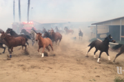 Sudden firestorm forces stampede at Bonsall horse training center
