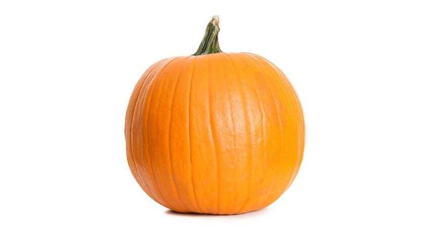 It's pumpkin season; make sure you take care of them by placing straw to keep them off the floor.