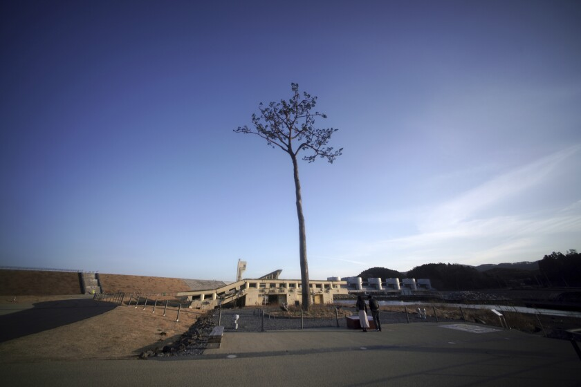"""A man and a woman stand near a replica of a lone pine tree that initially survived the 2011 tsunami that flattened the surrounding coastal forest, stands in Rikuzentakata, Iwate Prefecture, northern Japan, Thursday, March 4, 2021. The tree, which eventually died of seawater exposure, was known as the """"Miracle Pine,"""" and townspeople treated, reinforced and then preserved it as a memorial and symbol of hope for the region. (AP Photo/Eugene Hoshiko)"""