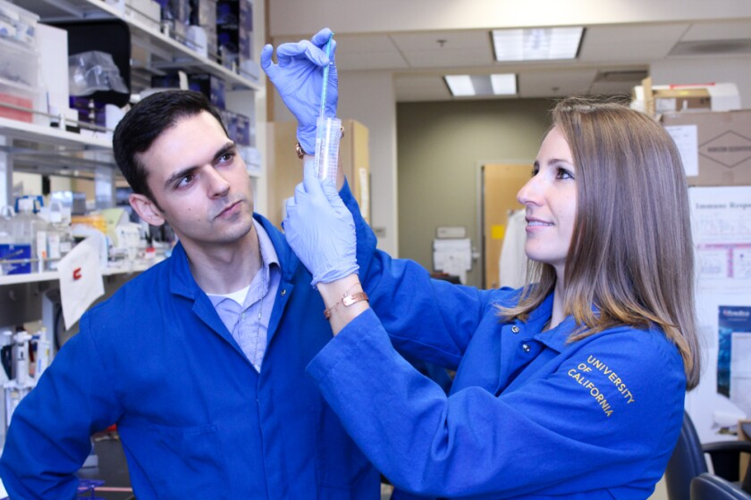 UCI researchers Henry Farhoodi, a graduate student in pharmaceutical sciences, and Aude Segaliny, a postdoctoral scholar in pharmaceutical sciences, examine their work.