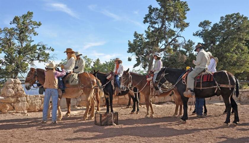 Fotografía de junio de 2010 cedida por el Parque nacional del Gran Cañón donde aparecen unas personas montadas sobre mulas en Bright Angel mientras se preparan para salir de paseo por el Gran Cañón de Arizona. EFE/Michael Quinn/Parque nacional del Gran Cañón/SOLO USO EDITORIAL/NO VENTAS
