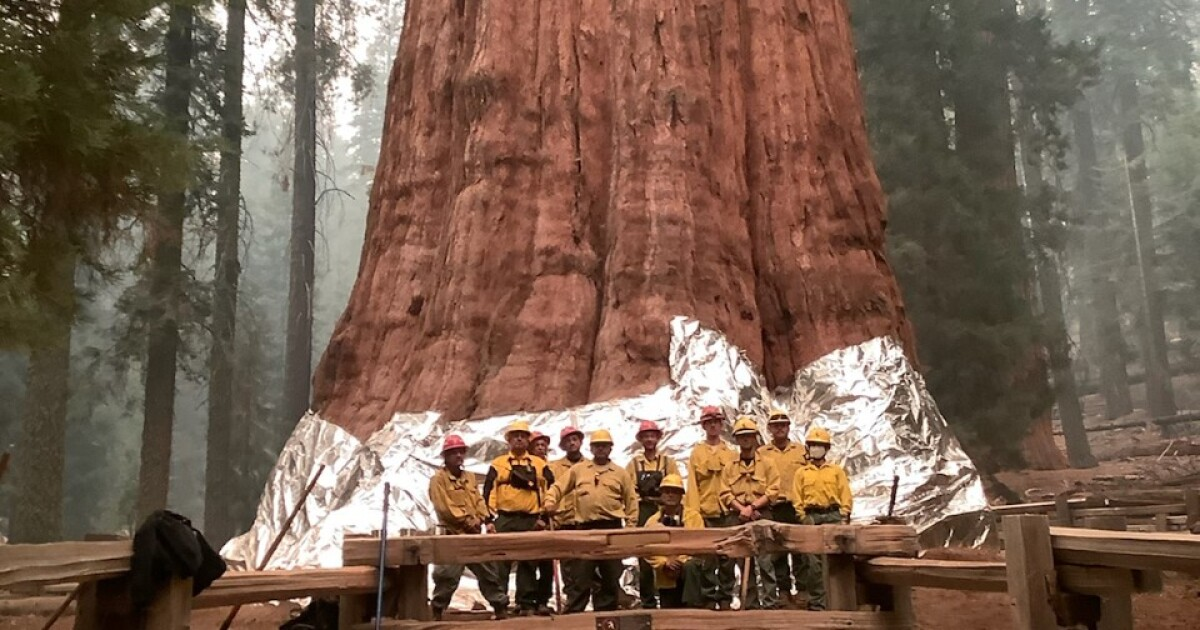 Sequoia National Park's General Sherman tree, one of largest in the world, still safe amid growing wildfire
