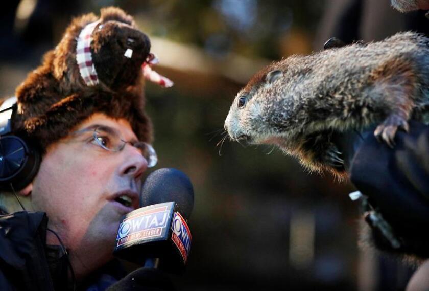 Un periodista intenta entrevistar a la marmota Phil en Punxsutawney, Pensilvania, Estados Unidos hoy, 2 de febrero de 2018. Según Phil, aún quedan seis semanas más de invierno en Estados Unidos. EFE