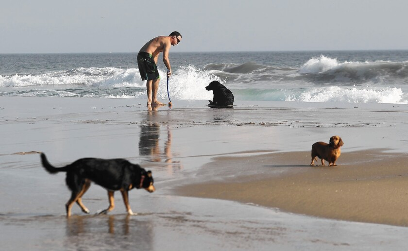 The Newport Beach Parks, Beaches and Recreation Commission opposed the idea of the city patrolling and enforcing dog restrictions on a stretch of beach controlled by Orange County near the mouth of the Santa Ana River. For years, many residents have used the area as a place to allow their dogs to run off leash. But in the past several months, neighbors have complained.