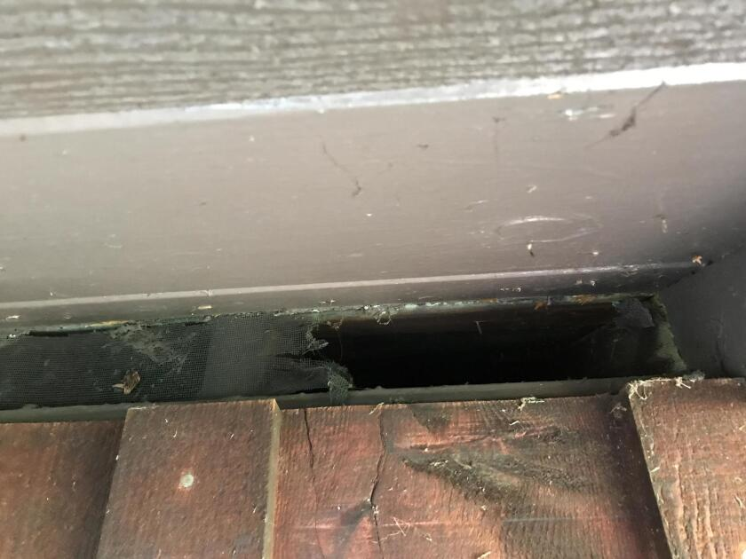 Creatures chewed through our roofline vents to gain access to the attic.