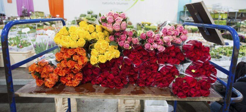 Varios ramos de rosas de distintos colores son puestos a la venta con motivo del Día de San Valentín.