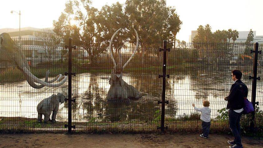 Tar from the La Brea Tar Pits has seeped up from the ground in this area for tens of thousands of years.