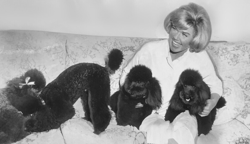 Doris Day with poodles at the Cypress Inn